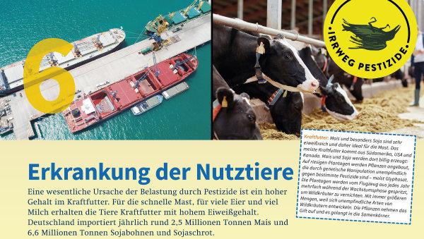 Irrweg Pestizide Die Erkrankung der Nutztiere